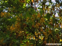 drzewokrzew_517