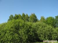 drzewokrzew_525
