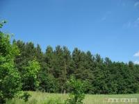 drzewokrzew_529