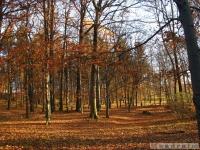 drzewokrzew_539