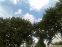 drzewokrzew_541