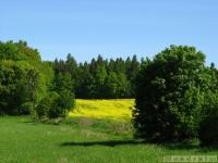 drzewokrzew_543