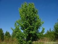 drzewokrzew_544