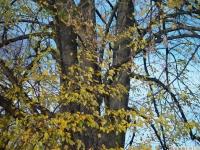 drzewokrzew_551