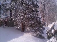 drzewokrzew_554