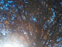 drzewokrzew_558
