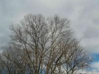 drzewokrzew_565
