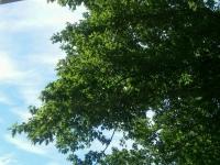 drzewokrzew_566