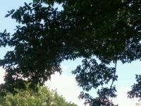 drzewokrzew_568