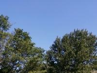 drzewokrzew_570