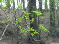drzewokrzew_585
