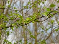 drzewokrzew_587