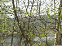 drzewokrzew_593