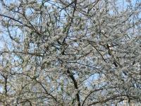 drzewokrzew_600