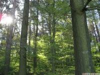 drzewokrzew_612