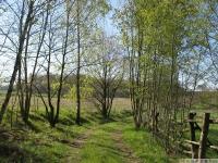 drzewokrzew_613
