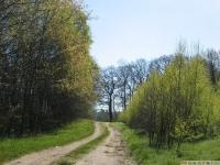drzewokrzew_616