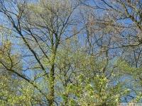drzewokrzew_618
