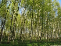 drzewokrzew_623