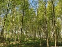 drzewokrzew_624