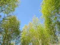 drzewokrzew_625