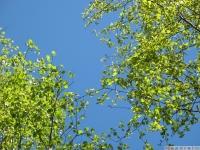 drzewokrzew_628