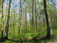 drzewokrzew_630