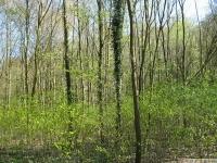 drzewokrzew_632
