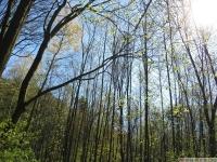 drzewokrzew_633
