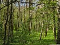 drzewokrzew_644