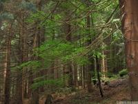 drzewokrzew_650