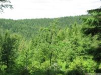 drzewokrzew_652