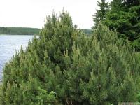 drzewokrzew_654