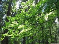 drzewokrzew_664