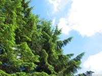 drzewokrzew_666