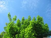 drzewokrzew_668