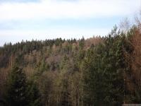 drzewokrzew_675