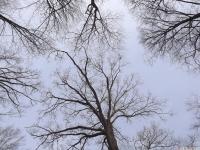 drzewokrzew_676
