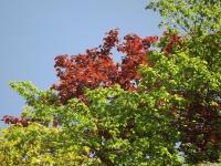 drzewokrzew_681