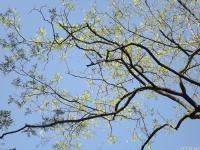 drzewokrzew_684