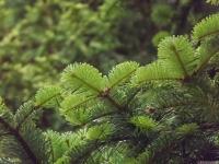 drzewokrzew_686