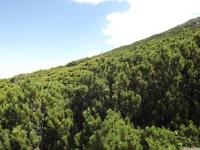 drzewokrzew_688