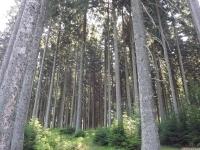 drzewokrzew_692