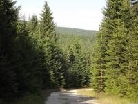 drzewokrzew_697