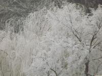drzewokrzew_702