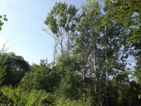 drzewokrzew_735