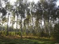 drzewokrzew_738