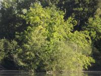 drzewokrzew_739