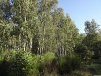 drzewokrzew_740