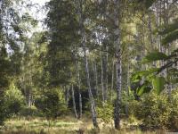 drzewokrzew_741